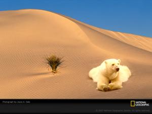 desert_bear