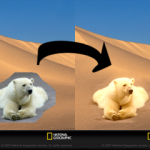 desert_bear_arrow