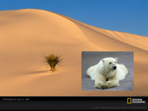 desert_bear_no_merge