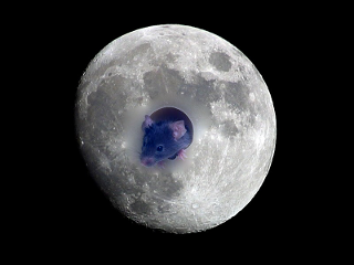 moon_mouse